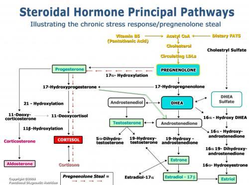 cholesterol journey